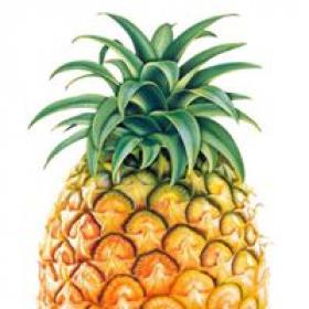 Pineapple Grove Cleaners
