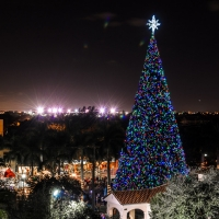 100 Ft Christmas Tree Holiday Festivities Downtown Delray Beach