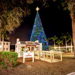 100 Ft Christmas Tree Lighting Downtown Delray Beach