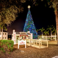 100 Ft Christmas Tree Lighting Downtown Delray Beach